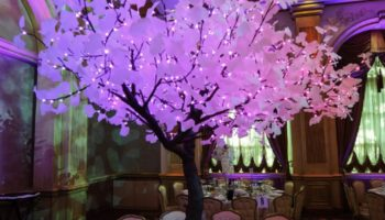 elegant lighted led tree rentals